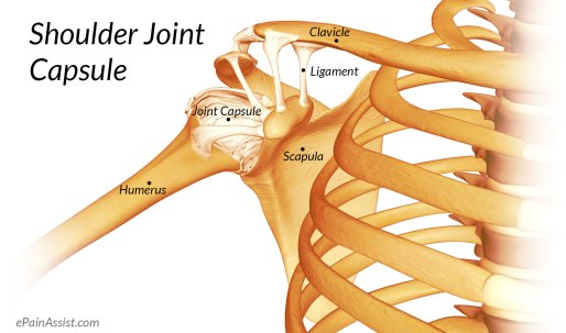 shoulder-joint-capsule.jpg